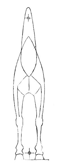 Tegning, hest. Drawing for horse sculpture.